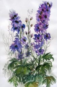 Rittersporn, Aquarelle, 40 x 60 cm