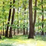 Buchenwald im Mai, Aquarell, 80 x 100 cm, eingerahmt